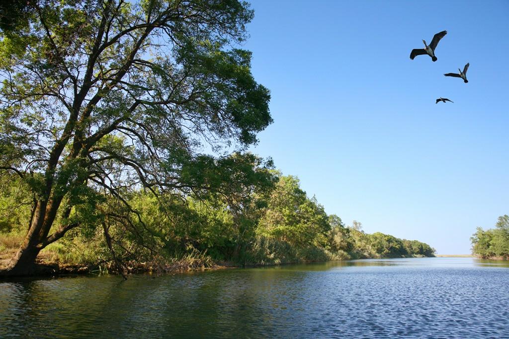 Корморани над река Велека